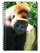 Kc Gorilla-3 Spiral Notebook