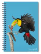 Keel-billed Toucan About To Land Spiral Notebook