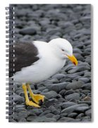 Kelp Gull Spiral Notebook
