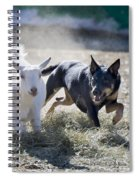 Kelpie Dog Spiral Notebook