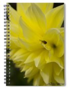 Kelvin Floodlight Dahlia Spiral Notebook