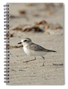 Kentish Plover Spiral Notebook