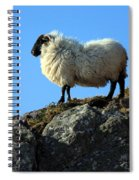 Kerry Hill Sheep Spiral Notebook