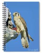 Kestrel At Nest Spiral Notebook