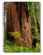Kevin And The Big Tree - Redwood National Forest Spiral Notebook