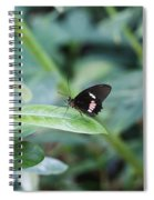 Key West Butterfly Conservatory - In Black White And Orange Spiral Notebook