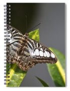 Key West Butterfly Conservatory - In Brown And White Spiral Notebook