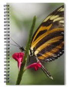 Key West Butterfly Conservatory - Papilio Zagreus Spiral Notebook