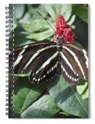 Key West Butterfly Conservatory - Zebra Heliconian Spiral Notebook