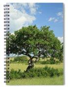 Kigelia Pinnata Tree Spiral Notebook