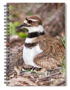 Killdeer And Young Spiral Notebook