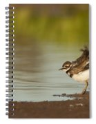 Killdeer Fluffing Up On The Shore  Spiral Notebook