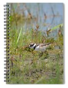 Killdeer Hatchling Spiral Notebook