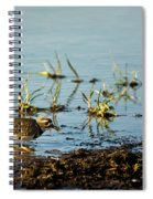 Kildeer Hunting For Worms Spiral Notebook