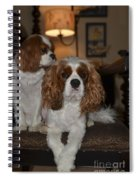 King Charles Dogs Spiral Notebook