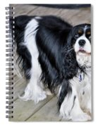 King Charles On The Boardwalk Spiral Notebook
