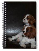 King Charles Puppies Spiral Notebook