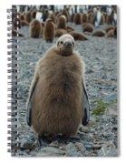 King Penguin Chick Spiral Notebook