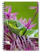 King Swallowtail Caterpillar Spiral Notebook