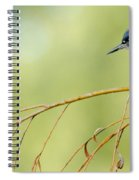 Kingfisher On A Willow Spiral Notebook
