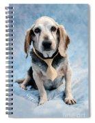 Kippy Beagle Senior And Best Dog Ever Spiral Notebook