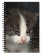 Kitten Spiral Notebook