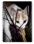 Kitten In The Plant Spiral Notebook