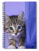 Kitten With A Curtain Spiral Notebook