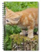 Kitten With Flowers Spiral Notebook