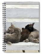 Kittens In Hydra Island Spiral Notebook