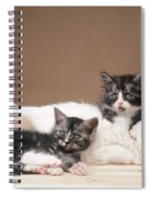Kittens Lying With Puppy Spiral Notebook