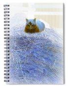 Kitty Blue IIi Spiral Notebook