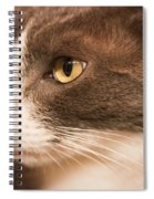 Kitty Boy Spiral Notebook
