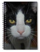 Kitty Cat Spiral Notebook