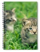 Kitty In Grass Spiral Notebook