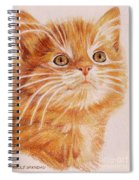 Kitty Kat Iphone Cases Smart Phones Cells And Mobile Cases Carole Spandau Cbs Art 349 Spiral Notebook