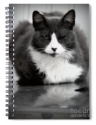 Kitty On A Car Spiral Notebook