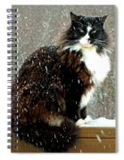 Kittycat In The Snow On The Fence Spiral Notebook