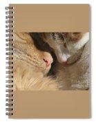 Kity Kat Love Spiral Notebook