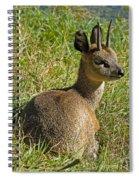 Klipspringer Antelope Spiral Notebook