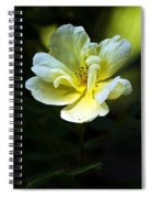 Knockout Spiral Notebook