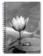 Koi Pond With Lily Pad And Flower Black And White Spiral Notebook