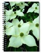 Kousa Circles Spiral Notebook