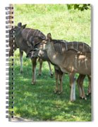 Kudu Antelope In A Straight Line Spiral Notebook