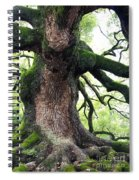 Kyoto Temple Tree Spiral Notebook
