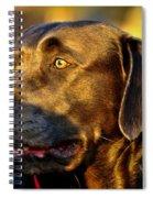 Lab Puppy At Sunset Spiral Notebook
