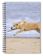 Labrador Dog Chasing Ball On Beach Spiral Notebook