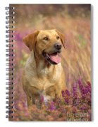 Labrador Dog Spiral Notebook