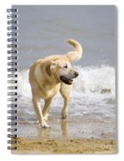 Labrador Dog Playing On Beach Spiral Notebook