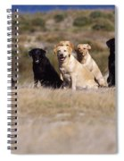 Labrador Dogs Waiting For Orders Spiral Notebook